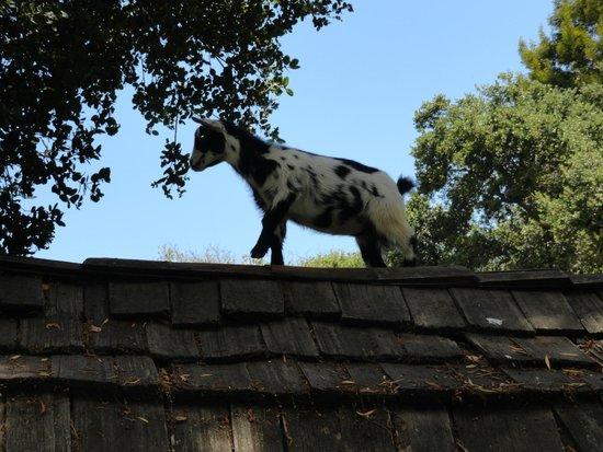 Children's Fairyland: Oreo on her house's roof
