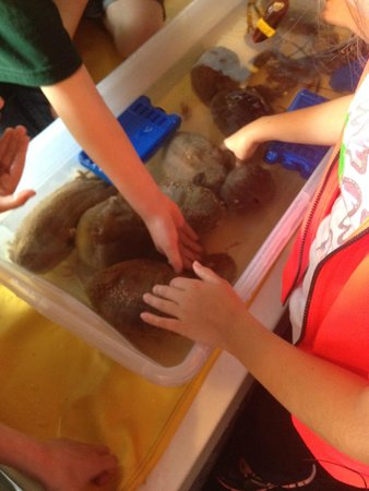 Diver Ed's Dive-In Theater: Touch tank with sea cucumbers