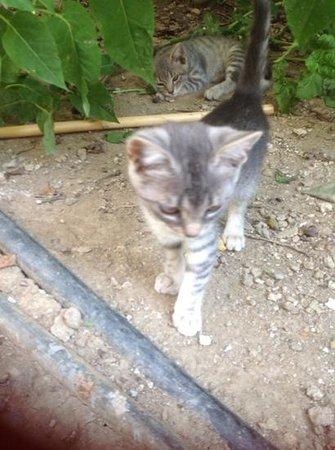 Hotel Korali: kittens