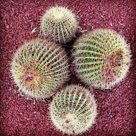 Royal Botanic Gardens: Cactus