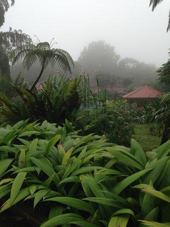 Hotel Montaña de Fuego Resort & Spa: A vista do jardim interno