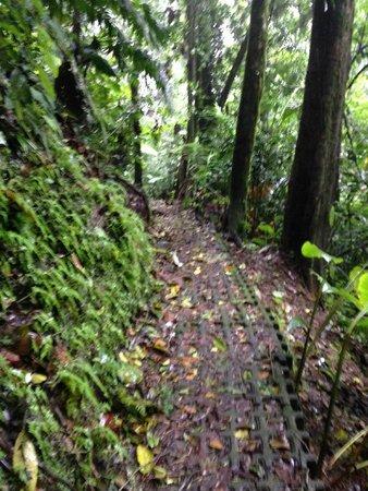 Hotel Montaña de Fuego Resort & Spa: A trilha de caminhar, piso seguro