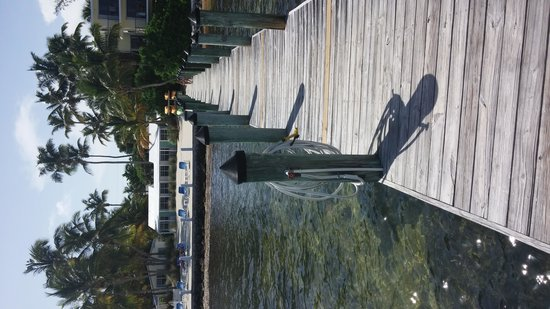 Pines and Palms Resort: The dock...