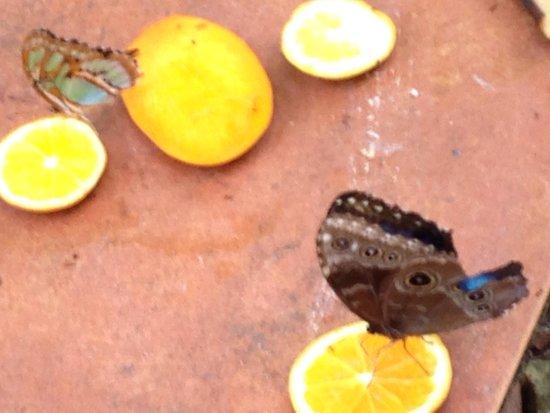 De Palm Tours : Butterflies