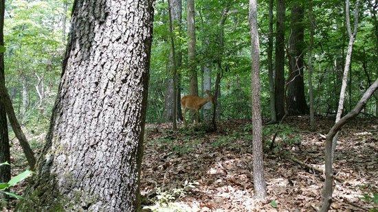 Great Falls Park: Yes I saw a deer. Woooohoooo!!!