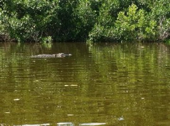 Shurr Adventures Everglades: Justin graciously put himself between this guy and us.