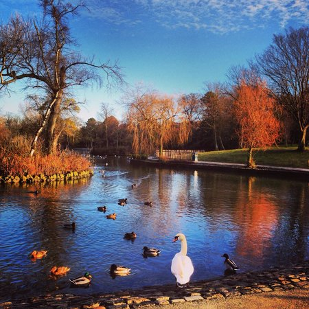 Stockton-on-Tees, UK : The Duck pond
