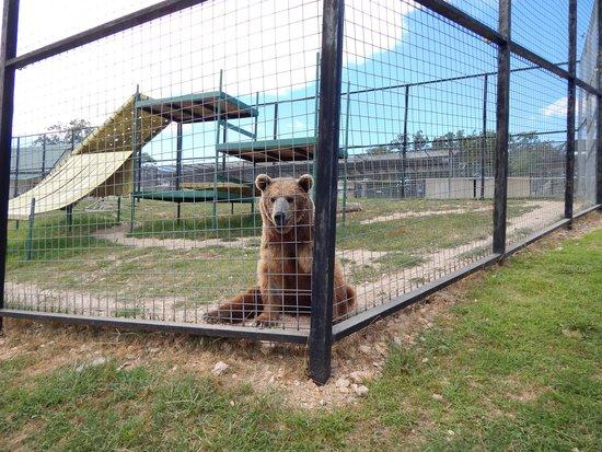 Turpentine Creek Wildlife Refuge: And Bears--oh my!
