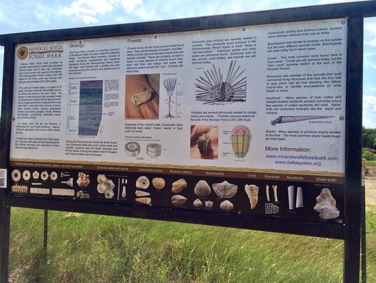 Mineral Wells, TX: This sign will help you identify the fossils that you find.