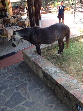Castellare di Tonda Resort & Spa: E lui a piede libero...