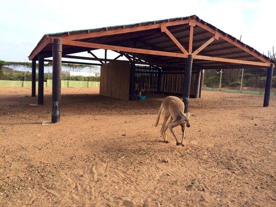 Philip's Animal Garden: No puedes dejar de visitar este lugar y contribuir con la vida animal de este lugar ;)