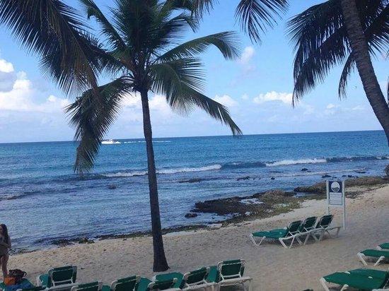 Viva Wyndham Dominicus Beach: Beach...