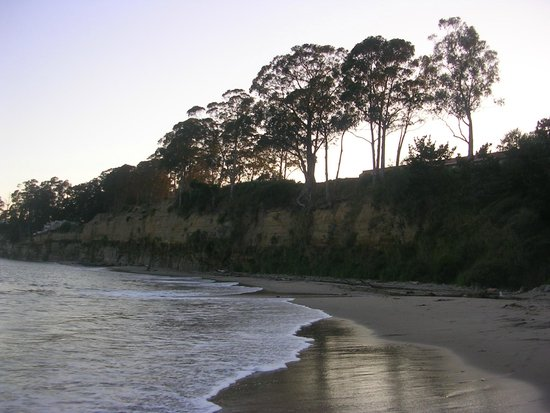 New Brighton State Beach: Treeline with the sun setting