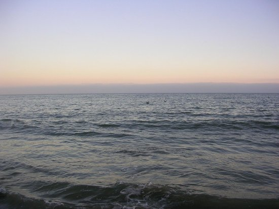 New Brighton State Beach : calm ocean with pelicans in view