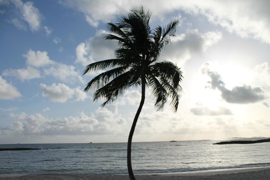 The Reef Atlantis, Autograph Collection: Cove Beach palm tree