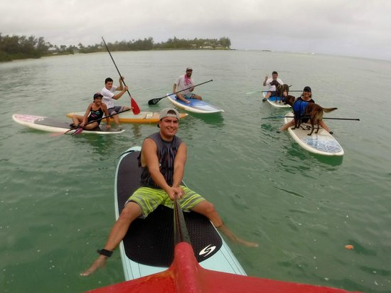 Turtle Bay Resort : Paddle boarding with Rocky and his dogs