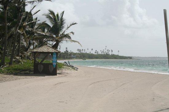 "Coconut Bay Beach Resort & Spa: ""Linus - its Flippers"""