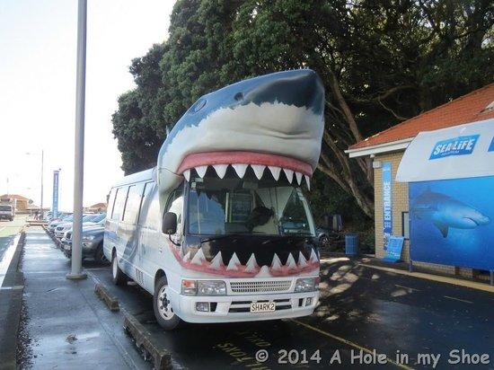 Kelly Tarlton's Sea Life Aquarium : Shark Bus