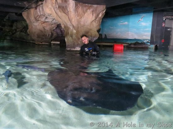 Kelly Tarlton's Sea Life Aquarium: Ray Tank