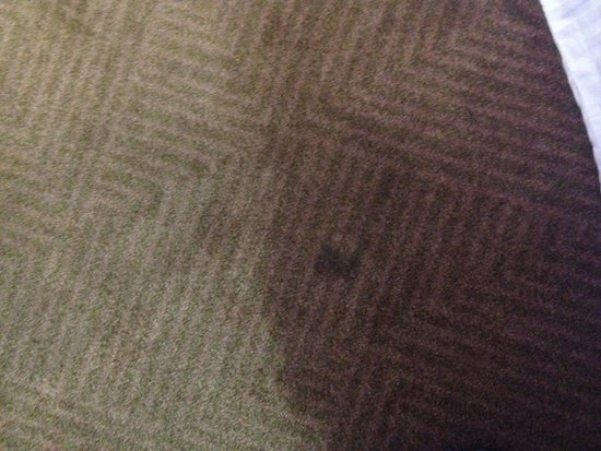Ramada Plaza Green Bay: The carpets were all stained! Does NOT even resemble website