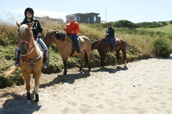 Green Acres Beach & Trail Rides: green acres horse beach rides =)