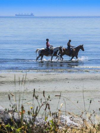 Weir's Beach RV Resort: Horses galloping through the water at Weir's Beach