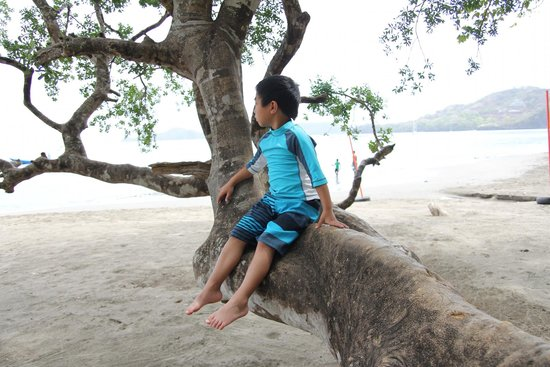 Hotel Bosque del Mar Playa Hermosa : chilling on a tree, looking out on the beach