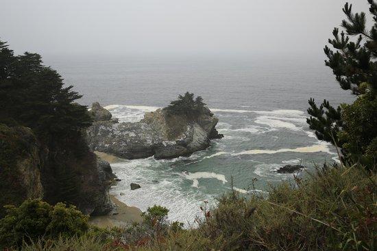 Julia Pfeiffer Burns State Park : Still Foggy