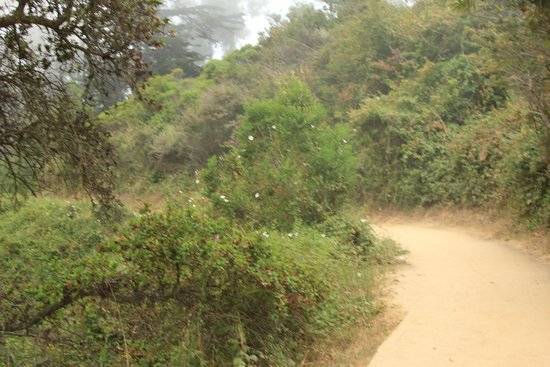 Julia Pfeiffer Burns State Park : Easy Trail