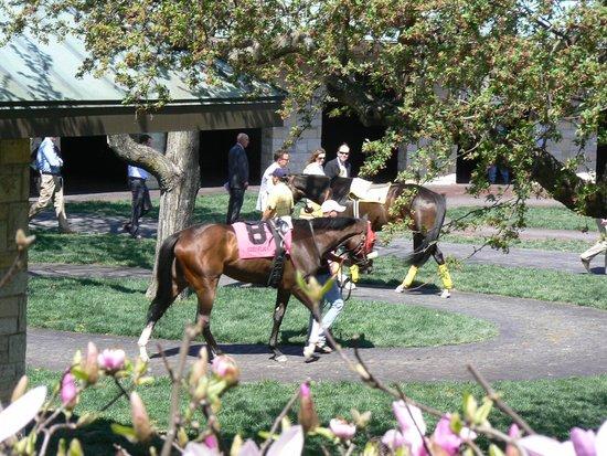 Keeneland: Horses in the Paddock