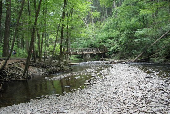 George W. Childs Park: Streams