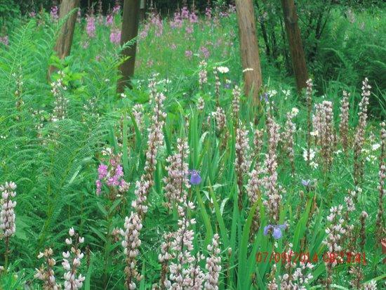 Juneau Rainforest Garden: Flora in natural setting