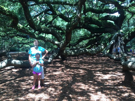 Angel Oak Tree : Limbs are supported due to weight
