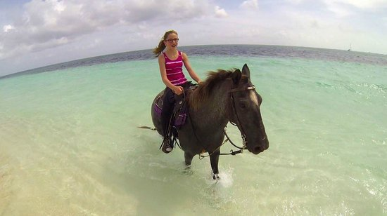 Ocean Club Resort : Hoarseback riding - rented from Caicos Corrals