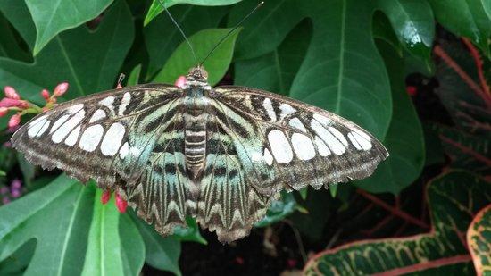 Butterfly Wonderland: Monarch butterflies