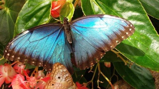 Butterfly Wonderland: Monarch butterfly