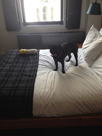 Ace Hotel New York: Pug claims his bed! The one with the view.