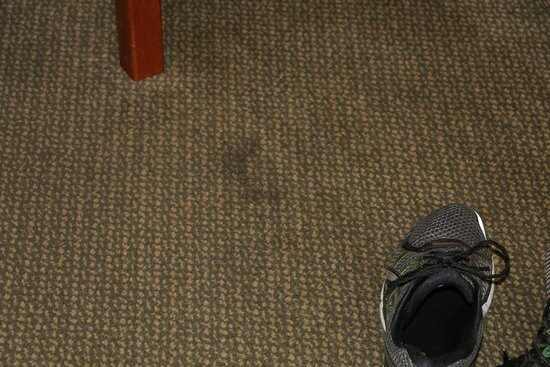 Quality Inn and Suites, Sequim: carpet stains