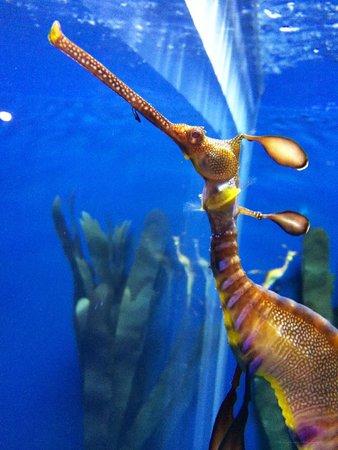 Georgia Aquarium: Sea Horse