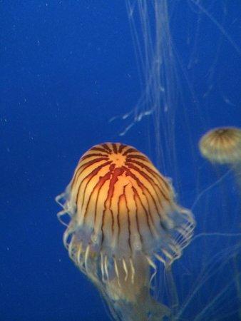 Georgia Aquarium: Jelly Fish