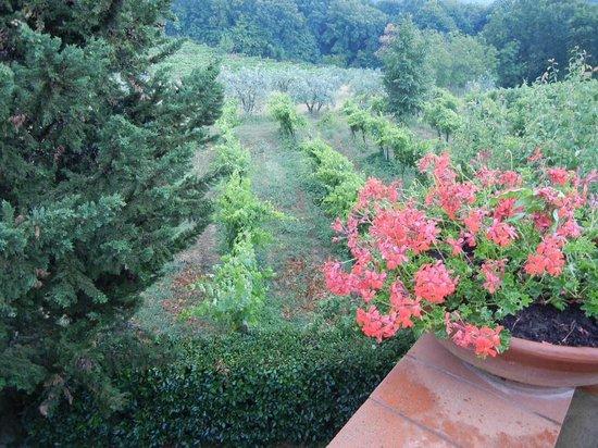 Casolare di Libbiano : View of grounds...