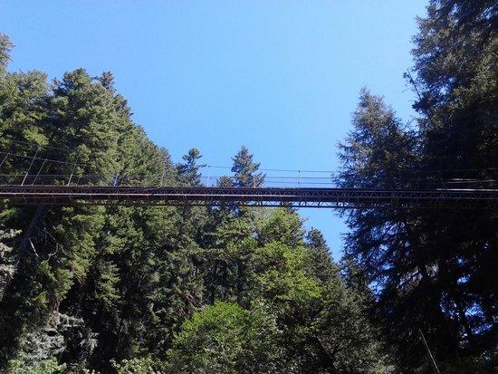Drift Creek Falls Trail: Below the bridge