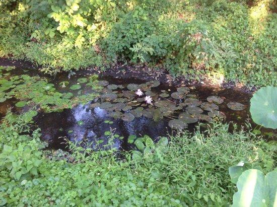 Lotus Therme Hotel & Spa: пруд на территории