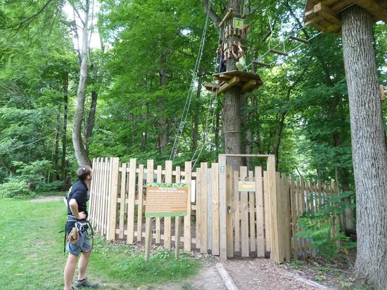 Go Ape Treetop Adventure Course : The First Ladder