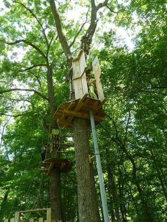 Go Ape Treetop Adventure Course : Tarzan Swing