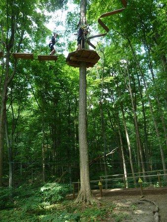 Go Ape Treetop Adventure Course : In the Tree Tops