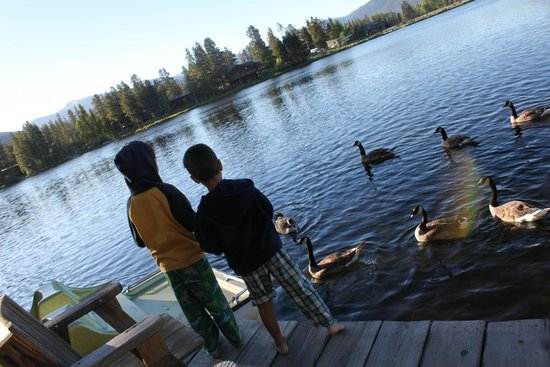 Moose Lake Lodge, LLC : Evening visit from the geese