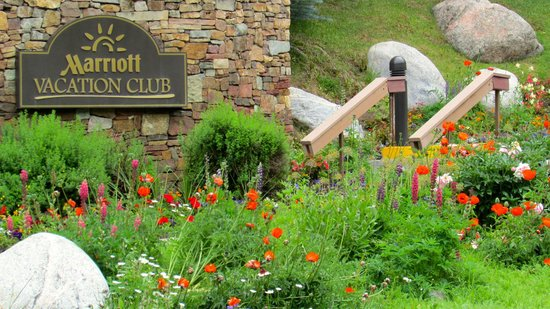 Marriott's StreamSide Evergreen at Vail: The summer flower explosion