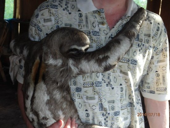 Treehouse Lodge: The Sloth We Loved to Hug