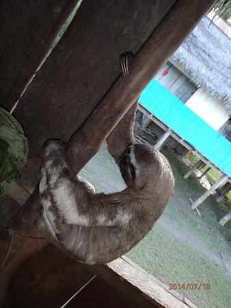 Treehouse Lodge: Our Huggable Sloth in Amazon Village